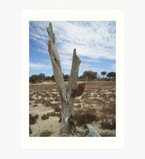 Victim of drought - Lake Mary, South Australia Art Print