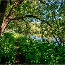 A Riverside Walk by Colin Metcalf