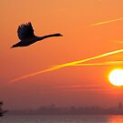 Follow the Sun by Jo Nijenhuis