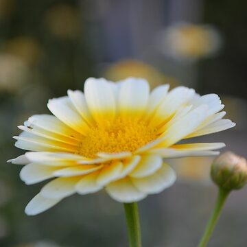 Macro Flower by sunilbhar