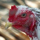 Fowl head by Martina Nicolls