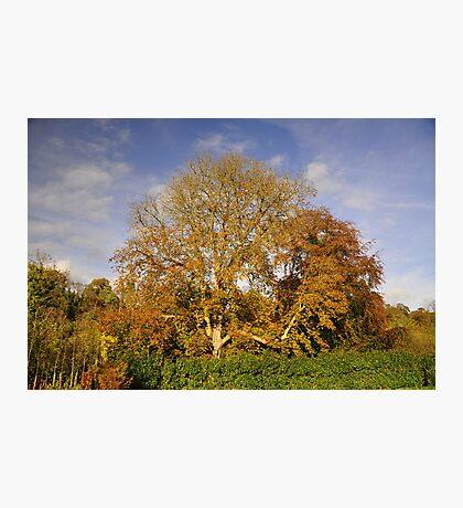 Autumnal colour's. Photographic Print