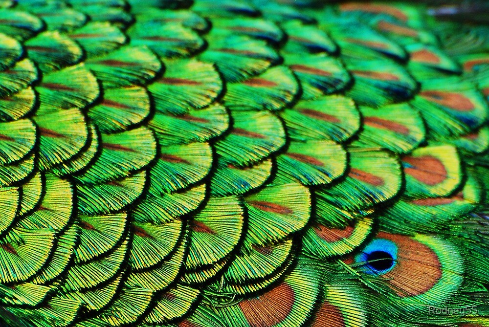 patterns in feathers by Rodney55