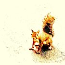 SQUIRREL ON THE SQUARE, Photo, for prints and products by Bob Hall©