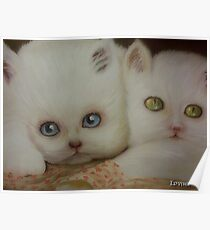 Two Cute Kittens Poster