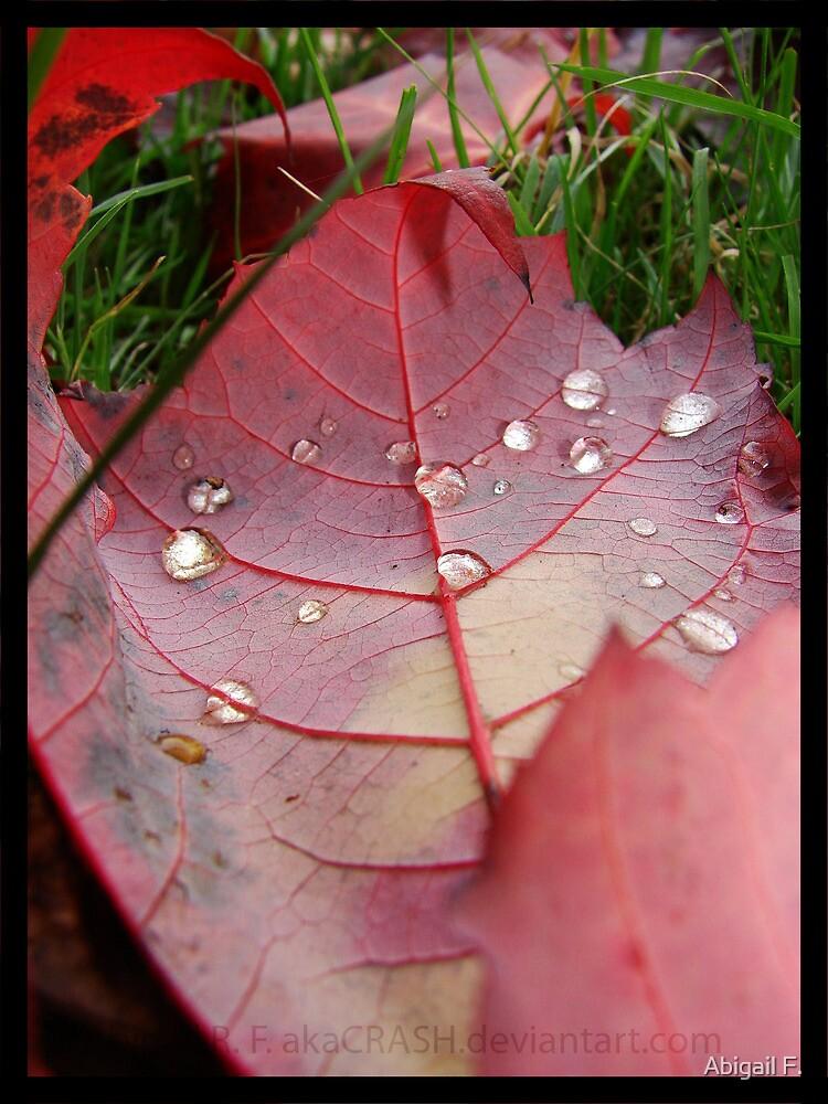 Dew Drops III by Abigail F.