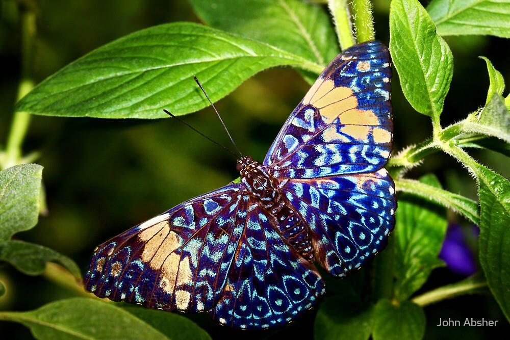 Red Cracker Butterfly   Tucson Botanical Gardens By John Absher