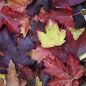 Autumn Colours - Garden Photography by Fluid Nature by vmajzlik