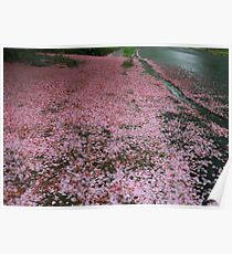 Flower petals in the rain Poster