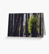 After the bushfires Greeting Card
