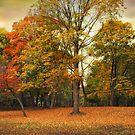 Sunset Autumn by Jessica Jenney