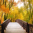 Awash in Autumn by Jessica Jenney