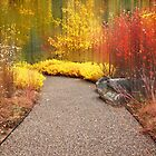 Intimate Autumn Trail  by Jessica Jenney