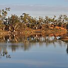 Darling River Anabranch by Peter Hammer