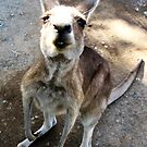 Kangaroo Smile by Yvette Bell
