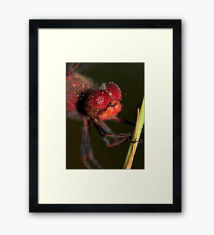 Dewed Wandering Percher Framed Print