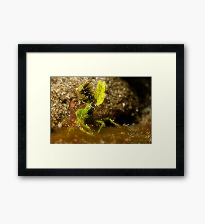 Underwater green leaf monster Framed Print