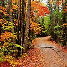 Autumn Study - Oxtongue River Road by Nancy Barrett