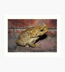 Evil Cane Toad Australia Art Print