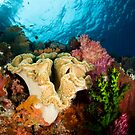 Reef Colours by muzy