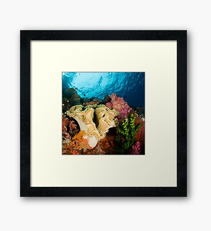 Reef Colours Framed Print