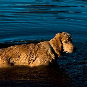 Cool Swim by sherryk