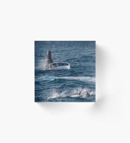 Spielerische Meeressäuger Acrylblock