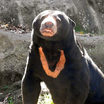 Sun Bear by kirstybush