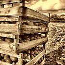 winter harvest by savosave