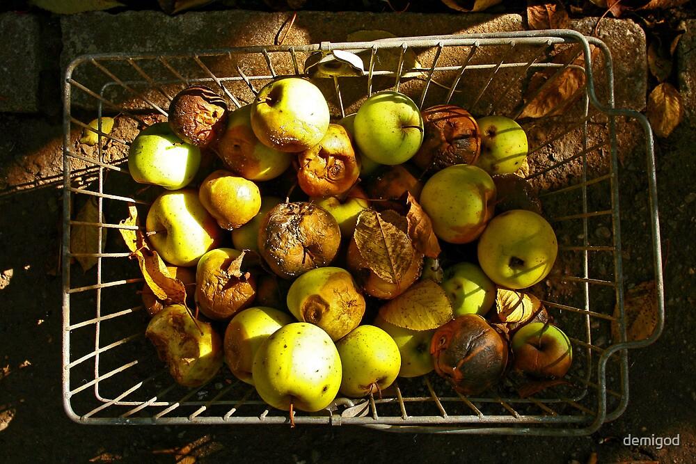 Rotten autumn apples. by demigod