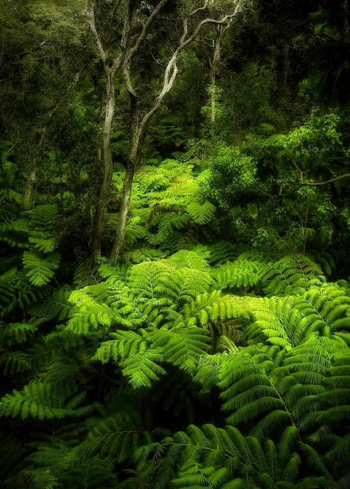 Fern Forest by Yves Rubin