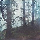 Damp Woods -  Forest in Fog by Dirk Wuestenhagen