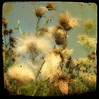 Wind Blown by gothicolors