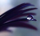 a drop of purple velvet by Ingrid Beddoes