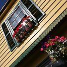 Akaroa Architecture by John Dalkin