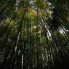 Bamboo Reach by Vittorio Zumpano