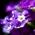 Purple Raindropped Petals by Victoria Penrose