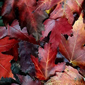 Autumn Reds - Garden Photography by Fluid Nature by vmajzlik