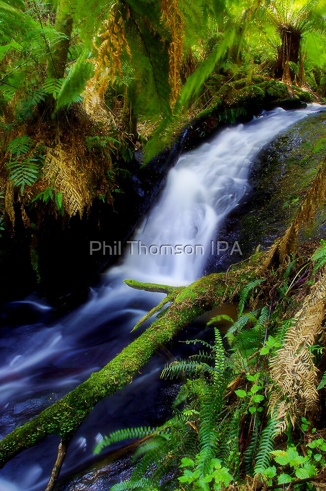 """Anne's Cascades"" by Phil Thomson IPA"
