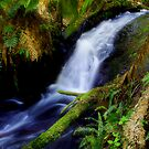 """Anne's Cascades"" by Phil Thomson IPA"