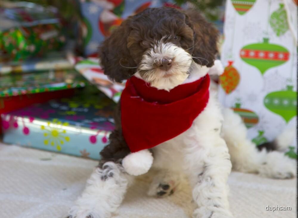 Labradoodle Welpen Weihnachten von daphsam