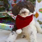 Labradoodle Puppy Christmas  by daphsam