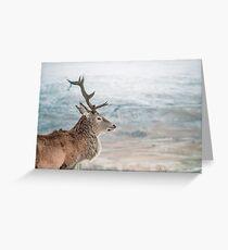 A Wild Scottish Deer (Cat Burton Photography) Greeting Card