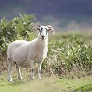 Summer Ewe by Cat Burton