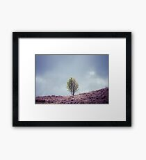 Alone in the Heather (Cat Burton Photography) Framed Print