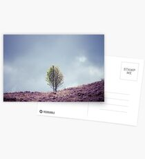 Alone in the Heather (Cat Burton Photography) Postcards