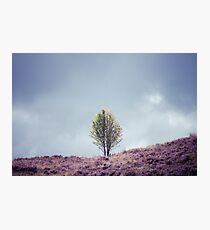 Alone in the Heather (Cat Burton Photography) Photographic Print