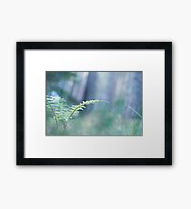 Ferns and Daydreams (Cat Burton Photography) Framed Print