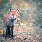A Scottish Fox by Cat Burton