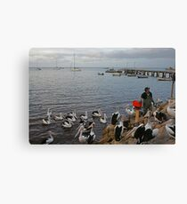 Pelican Feeding at Kingscote, Kangaroo Island Canvas Print